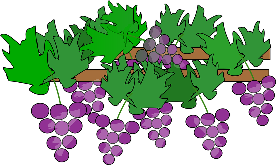 cartoon clip art 2015 fruit free vector graphic on pixabay rh pixabay com grape vine clip art free grape vine clip art images