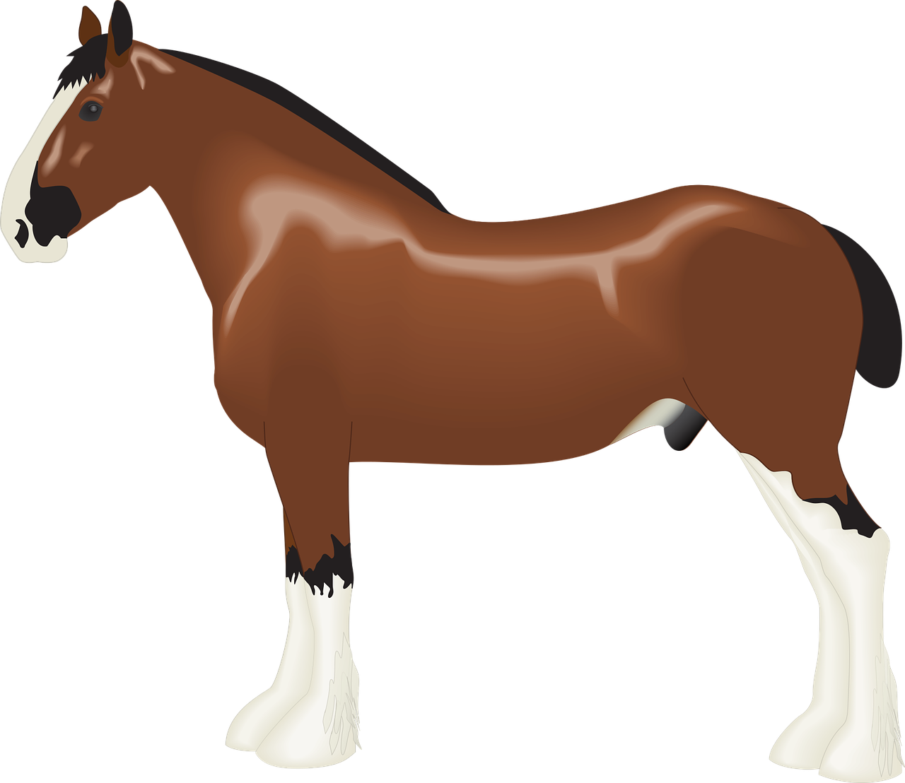 Animal Clydesdale Draft Free Vector Graphic On Pixabay