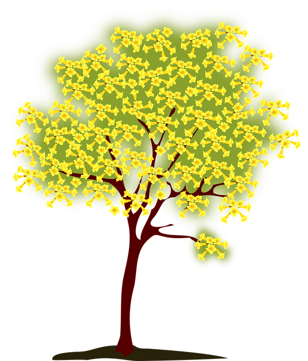 Tree Blossoming Yellow · Free vector graphic on Pixabay