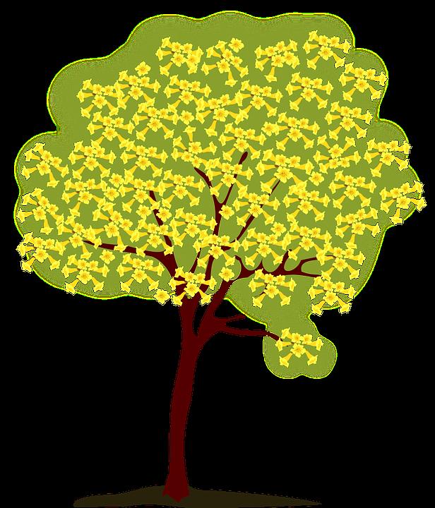 Drzewo, Blossoming, Żółty, Natura, Wiosna