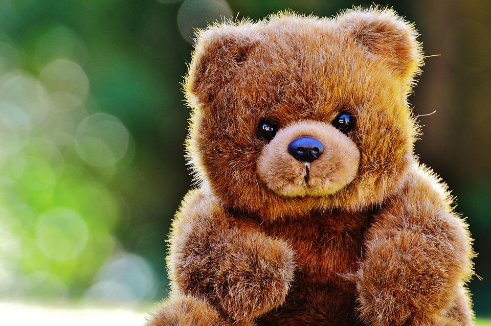 Free photo bear teddy soft toy free image on pixabay 1295092 - Free teddy bear pics ...