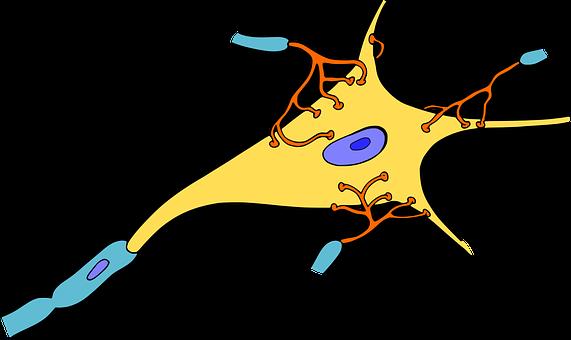 Biology, Brain, Cell, Medicine, Nerve