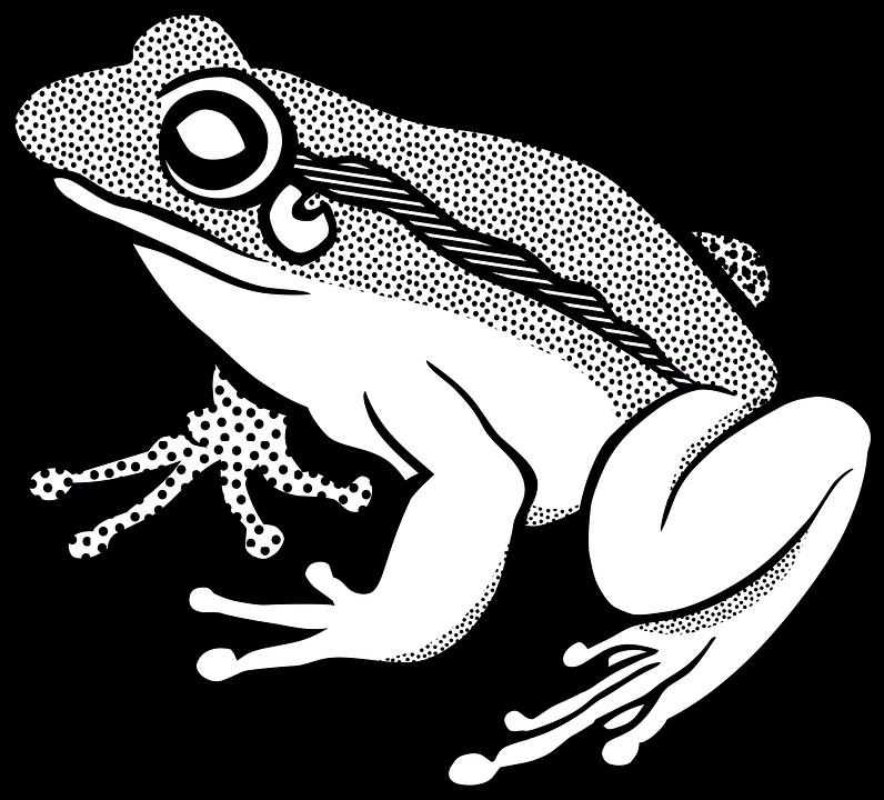 Katak Gambar Vektor Unduh Gambar Gratis Pixabay