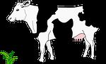 black, blanche, cow