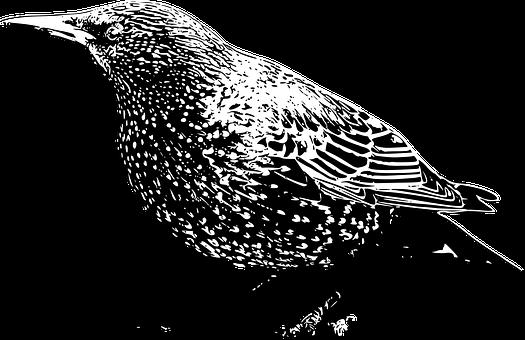 τέρας πουλί μαύρο