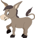 burro, donkey, jackass