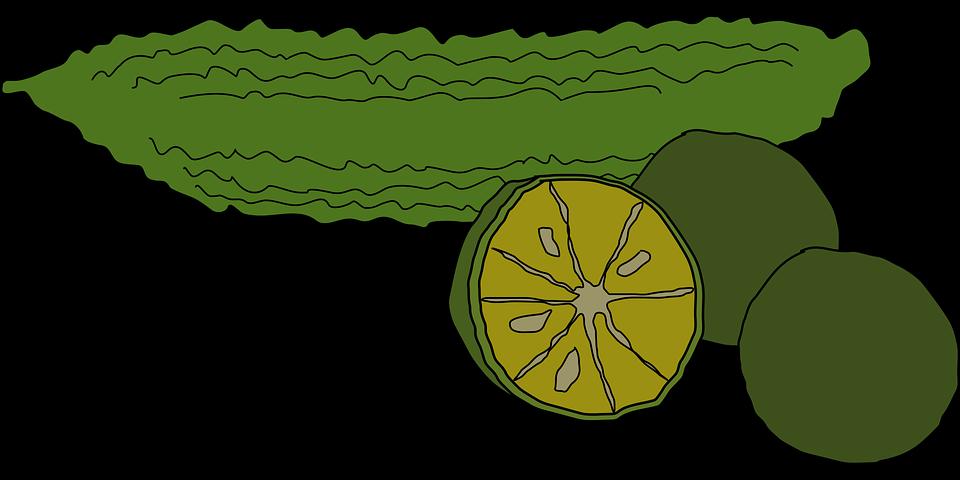 Bitter Melon Citrus Depressa Food · Free vector graphic on ...
