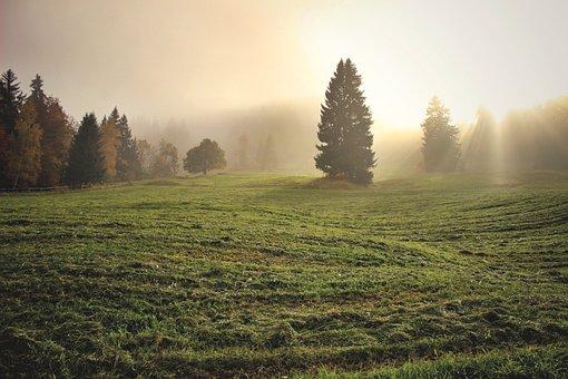 草, 木, フィールド, 牧草地, 日光, 霧, 日の出, 霧の朝, ヘイズ