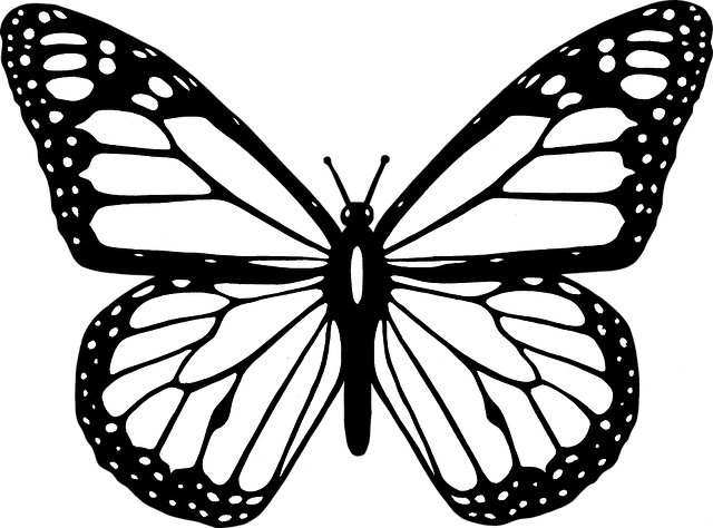 free vector graphic  animal  black  butterfly  flight