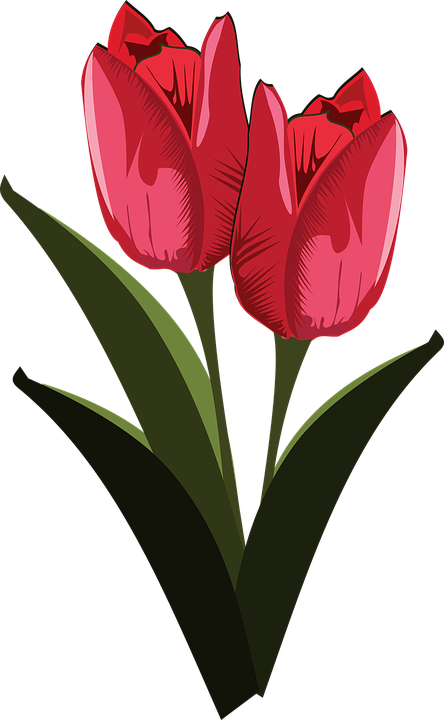 Free Vector Graphic: Clip Art, Flor, Flora, Flower