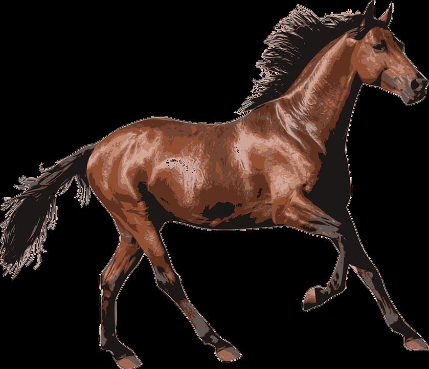 Pferd, Rennpferd, Tier, Pferde, Pferdesport, Reiten