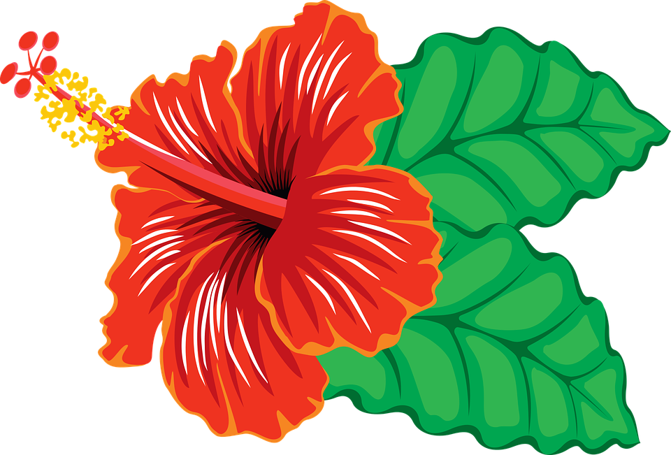 Free vector graphic flower hibiscus tropical free image on pixabay 1297488 - Hibiscus images download ...