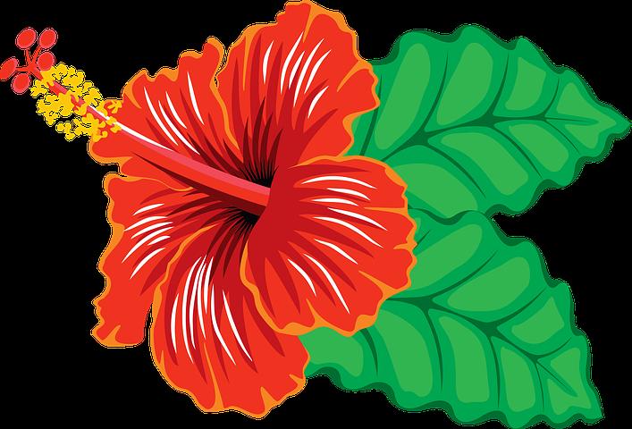 40 Vektor Kembang Sepatu Bunga Gratis