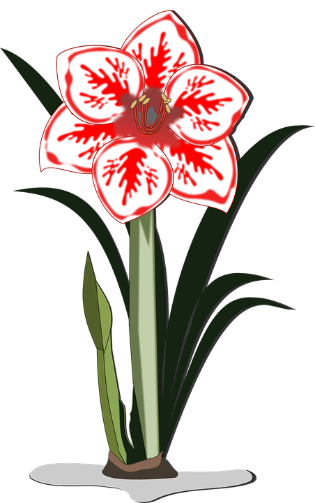 kostenlose vektorgrafik  amaryllis  clipart  flor  flora - kostenloses bild auf pixabay