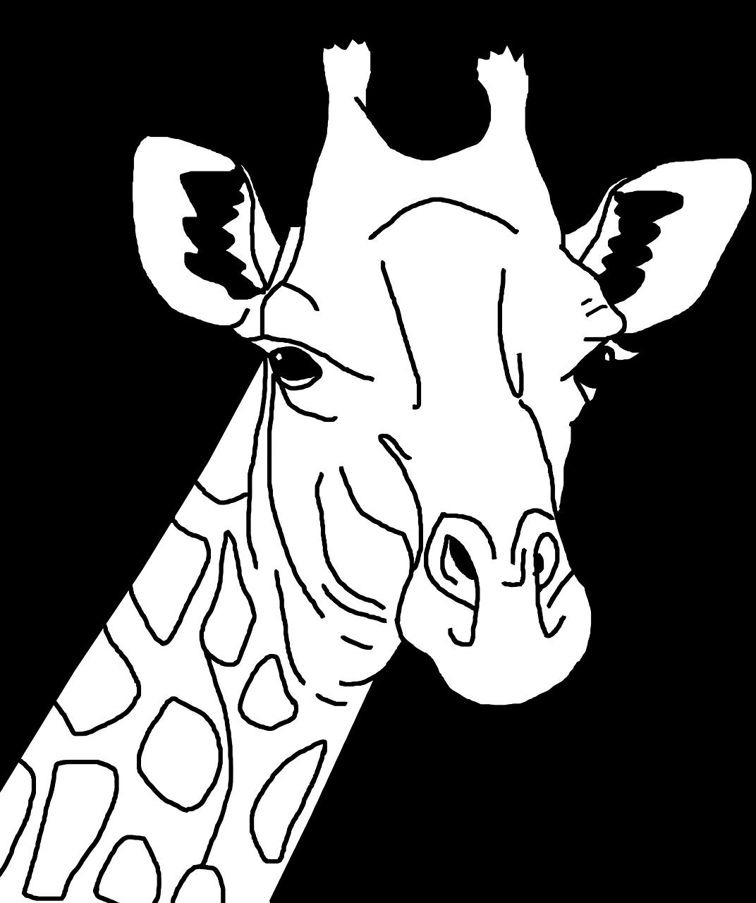 картинки животных черно белые шаблоны любит расти