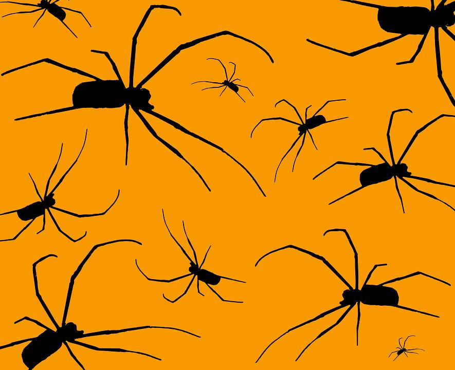 arachnid fear halloween phobia scary spiders - Phobia Halloween