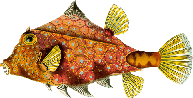 Animal Art Forms In Nature Clips Fish