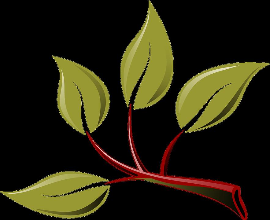 Branche, éco, vert, feuille, feuilles, plante, arbre