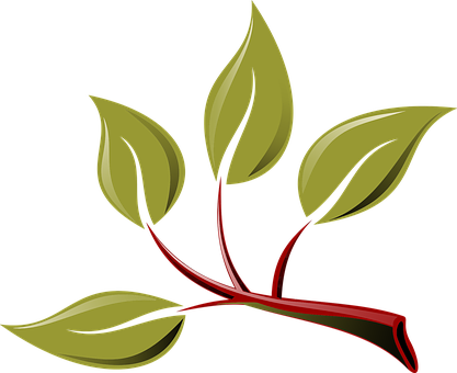 Peste 1000 De Imagini Gratuite Cu Eco și Verde Pixabay