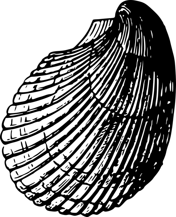 La concha de la tia 1 - 1 4