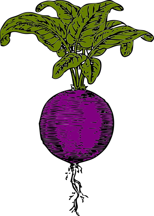 free clipart beets - photo #11