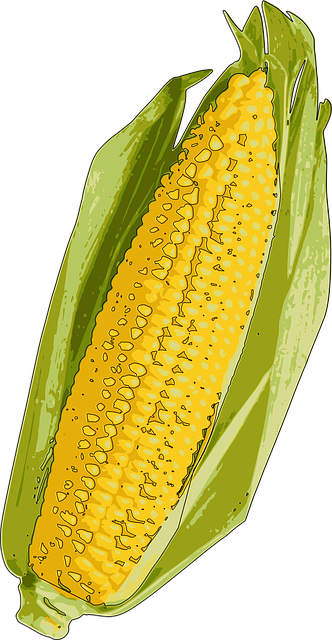 Corn On The Cob Indiana My 183 Free Vector Graphic On Pixabay