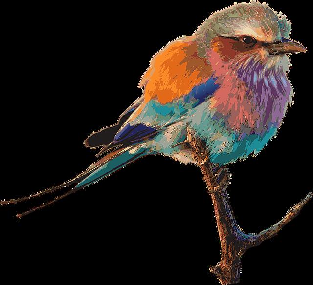 Oiseau lumineux couleur images vectorielles gratuites sur pixabay - Dessin oiseau en cage ...