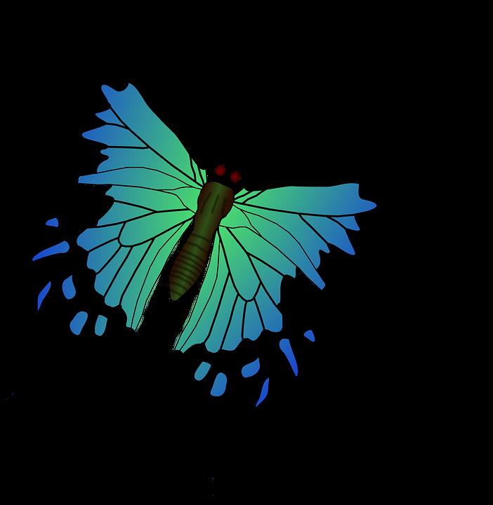 Motýl Modrá Hmyz - Vektorová grafika zdarma na Pixabay