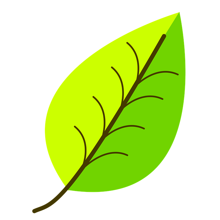 how to draw tiny leaves