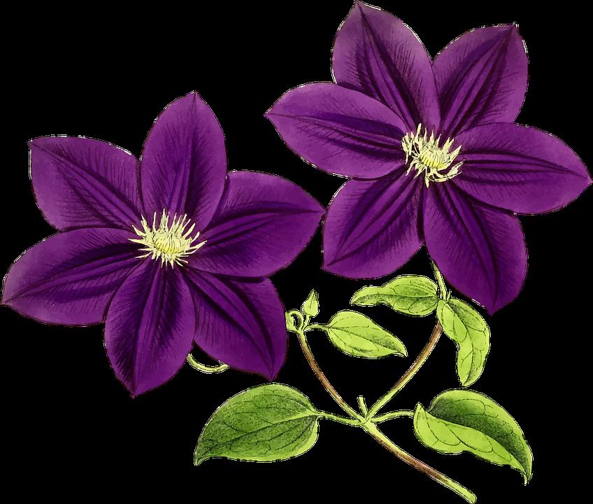 Floral Flowers Leaf Leaves Purple 1300102 on Violet Border Clip Art