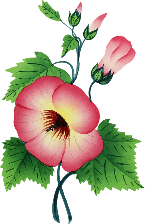 Free Vector Graphic Colorful Floral Flower Plant
