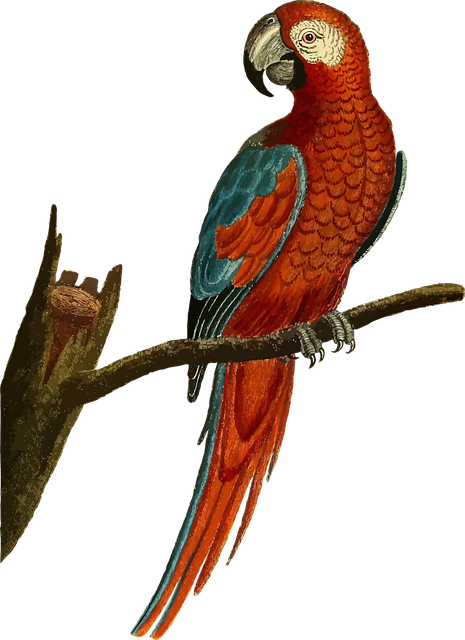 Animal Bird Fly Red · Free vector graphic on Pixabay