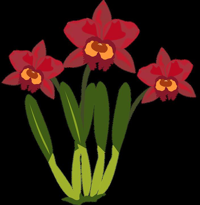 kostenlose vektorgrafik clipart flor flora blume