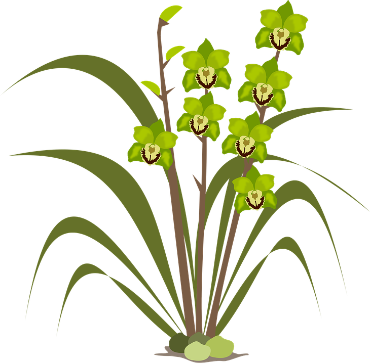 clipart_fiori_c234 Clip art di fiori