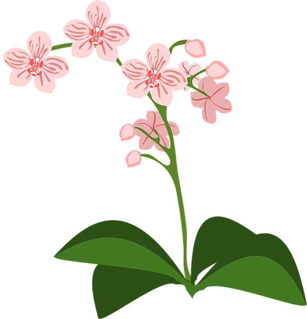 Clip Art Flor Flora · Free vector graphic on Pixabay