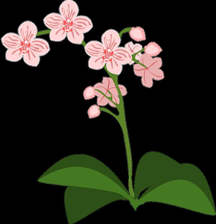 clipart bilder blommor