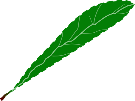 Branch, Foliage, Green, Leaf, Leaves
