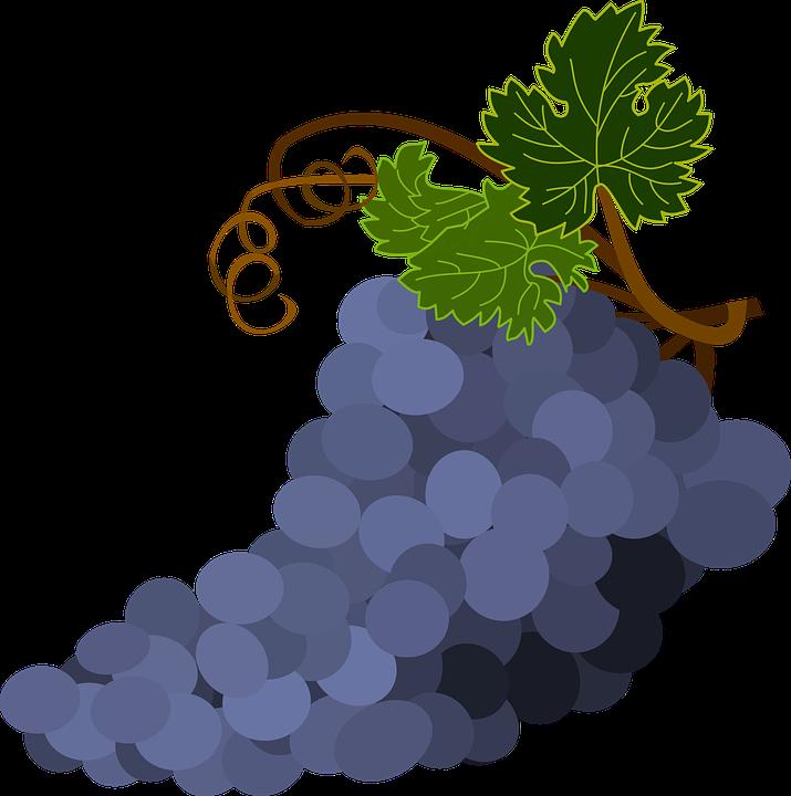 Kiść Winogron Liście Darmowa Grafika Wektorowa Na Pixabay