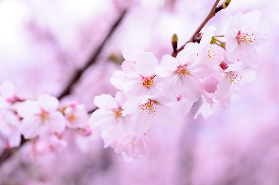 Plant Spring Flowers Free Photo On Pixabay