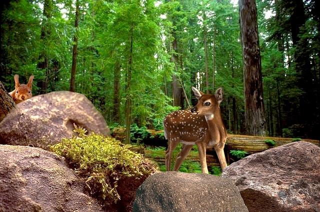 Nature Forest Animals 183 Free Photo On Pixabay