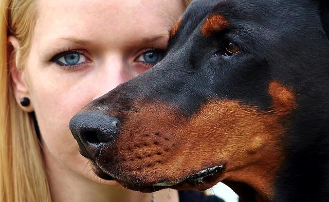 Blonde Woman Doberman Eyes 183 Free Photo On Pixabay