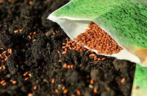 Seeds, Sow, Garden, Cross, Gardening