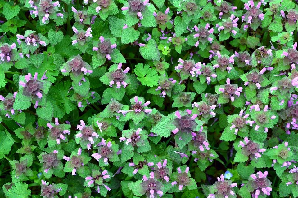 Bloemen Afbeeldingen Gratis