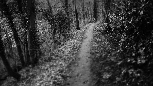 暗い道, パス, 林, 神秘的な, 神秘的なパス, 不気味です, 黒と白