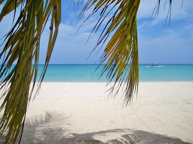 Vw California Camper >> Jamaika Palmen Strand Typisch · Kostenloses Foto auf Pixabay