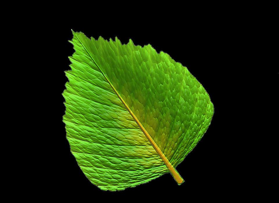 Feuille vert verte image gratuite sur pixabay feuille vert feuille verte plantes feuilles altavistaventures Image collections