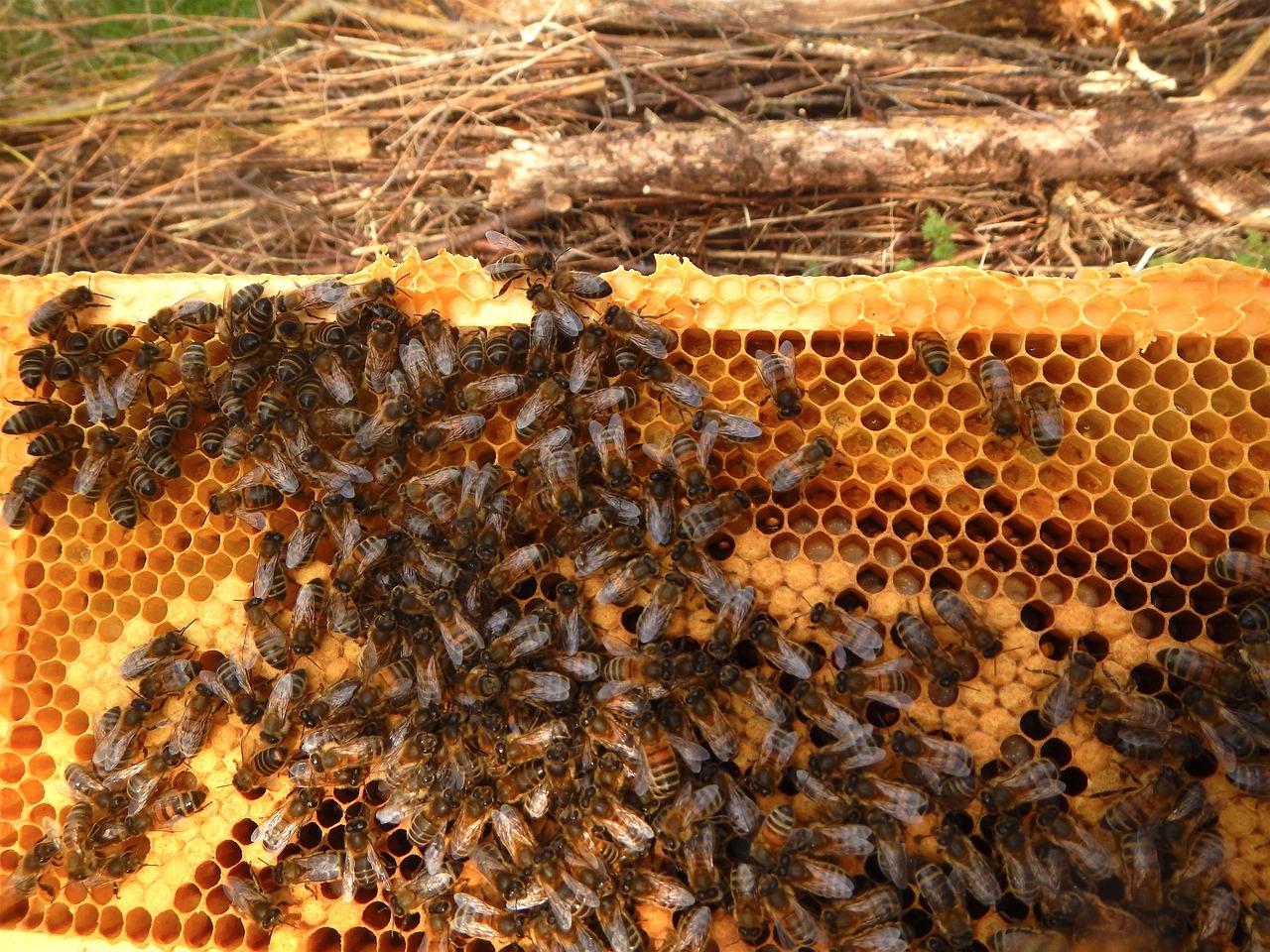 пчеловод улей пчелы картинки занимается художественной фотографией