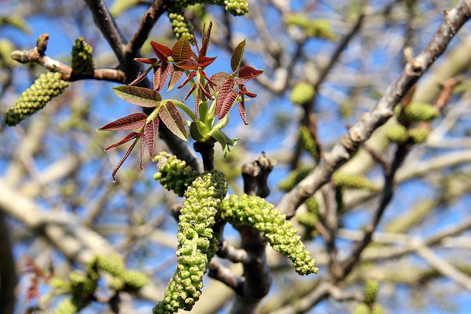 Tavaszi Levelek Zöld · Ingyenes fotó a Pixabay-en 37e915e8f0