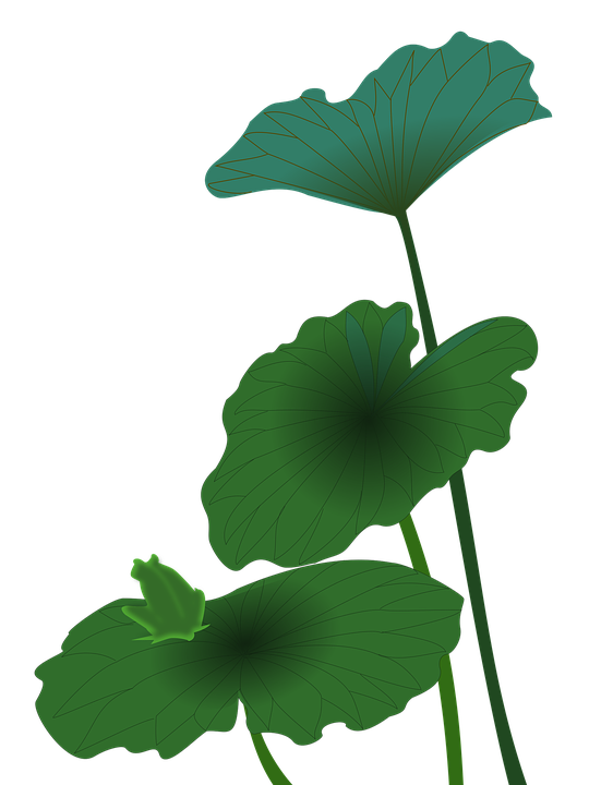 Wallpapers together with Wallpapers likewise Cartoon Shower Cliparts moreover Lotus Frog Green Summer Quiet 1306551 furthermore Wallpapers. on frog backgrounds