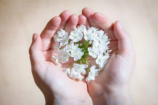 花, 白, 白い花, ニラの花, 手, 維持, 愛する, 注意, 塞ぎます